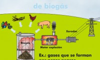 Process for obtaining biogas for electrical production