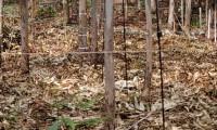 Rastrojos y residuos agrícolas